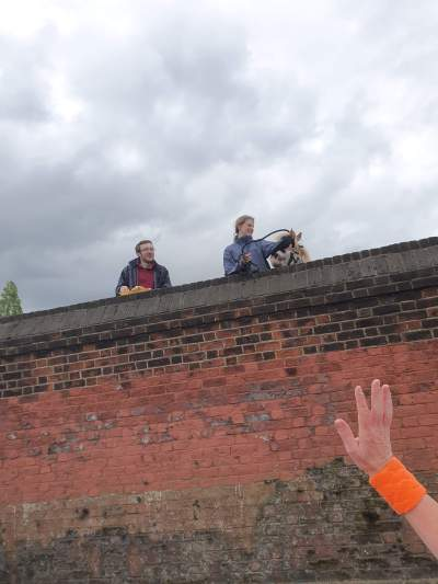 My arm with an orange wristband waving at a horse who is leaning over a large brick wall